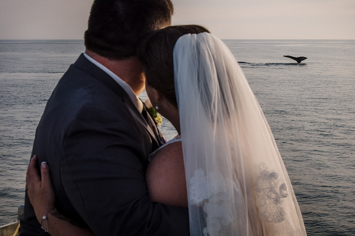 Halifax Wedding Photographers, Whale Watching Wedding, Humpback Whales, Whale Watching tours, Brier Island Weddings, Brier Island, Jenn Nauss, Cooked Photography, Nova Scotia Weddings, East Coast